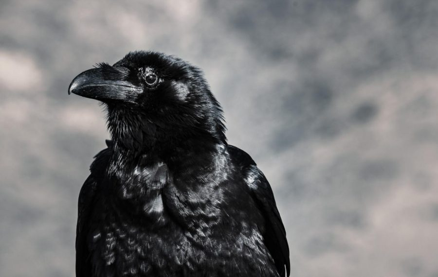 Guidance+From+a+Crow