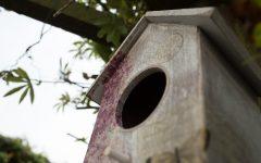 Bird Box: Finally a Great Movie from Netflix