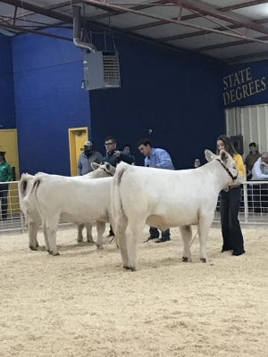 Canton FFA Competes in Way Out West Show