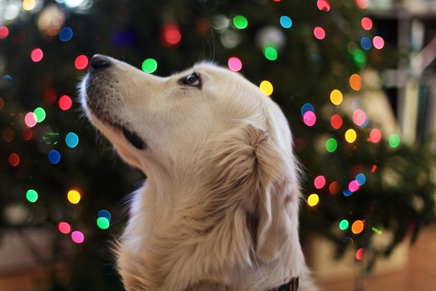 Different Ways to Keep The Family Dog Happy This Winter