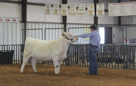 Spring Livestock Show is the Books