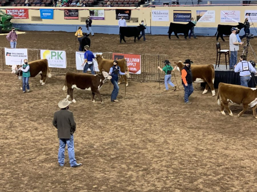 The+largest+junior+stockshow+in+Oklahoma+requires+showmen+to+weat+masks.+Audiences%2C+however%2C+were+not+required+to.+